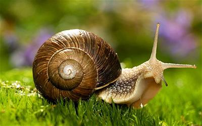 snailpic